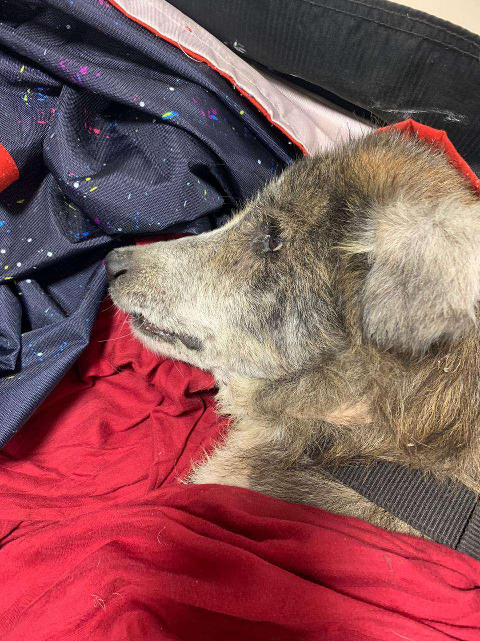 Fraser Town Residents Rush Wounded Dog To Be Saved. People Contribute To Cover Expenses