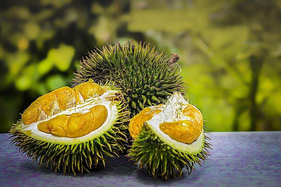 Unusual Aphrodisiacs From Asia